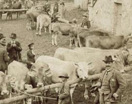antica-fiera-delle-vacche